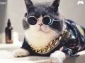 金輝城市廣場 金輝城市廣場 體驗貓式凡爾賽活動